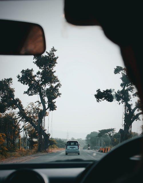 Foto d'estoc gratuïta de arbre, carretera, cotxe, Índia