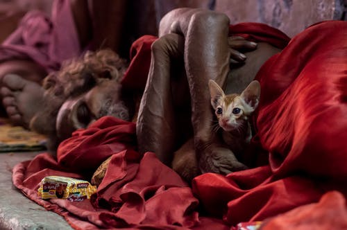 Free stock photo of animal, animal photography, banaras, cat