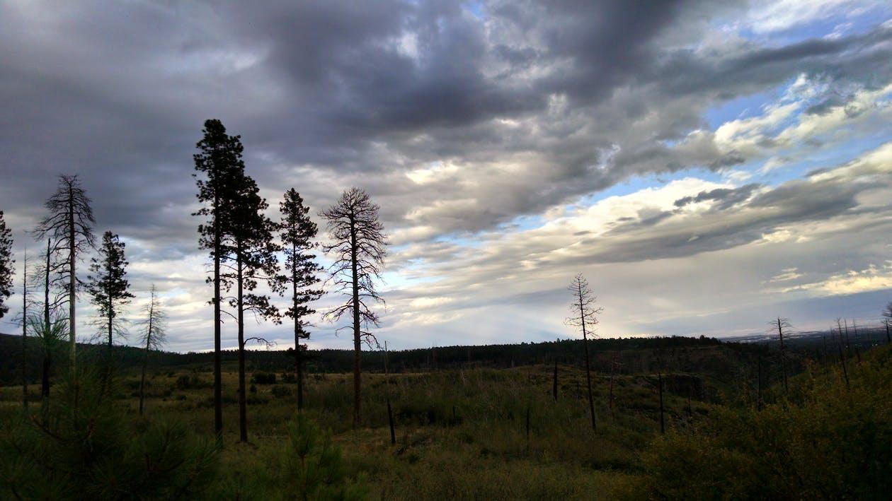 arbres, cel, herba