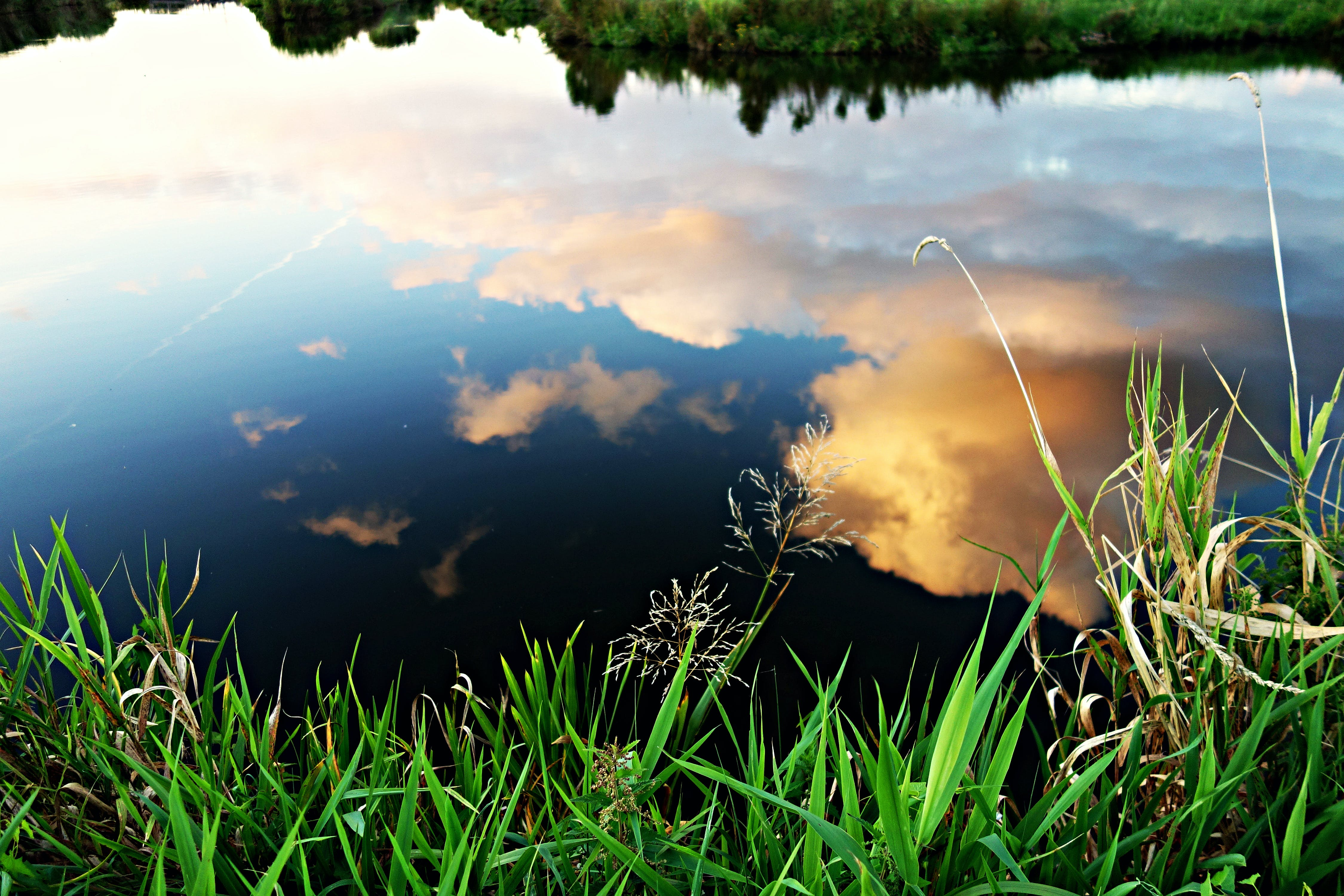 Reflection of White Clouds on Pond