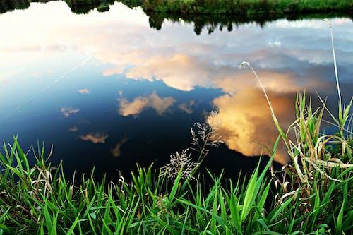 Immagine gratuita di acqua, alberi, ambiente, cielo