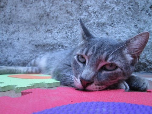 Gray Tabby Cat Lying on Puzzle Mat