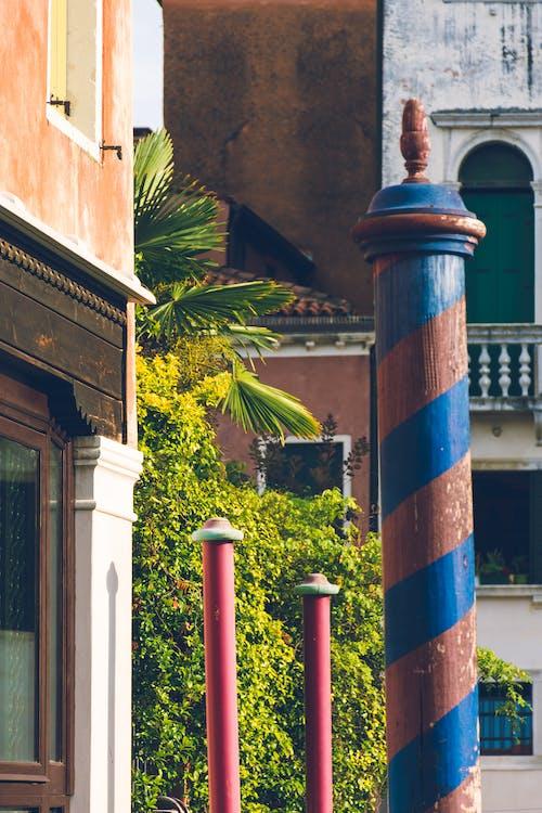 Free stock photo of mediterranean, palm tree, urban