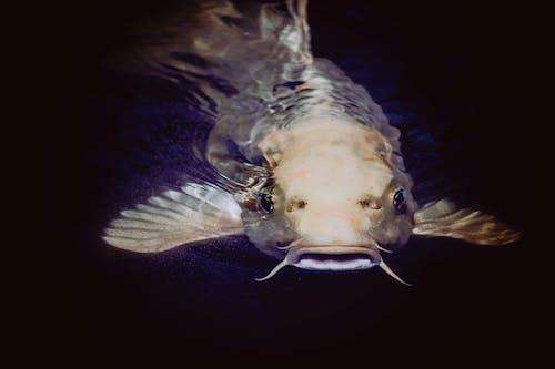 Foto profissional grátis de água, animal, bicho, embaixo da água
