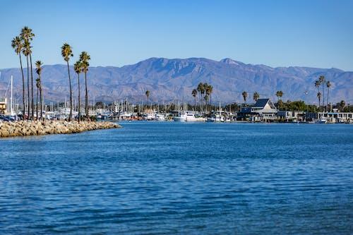 Ảnh lưu trữ miễn phí về biển, california, cảng quần đảo channel, cây cọ