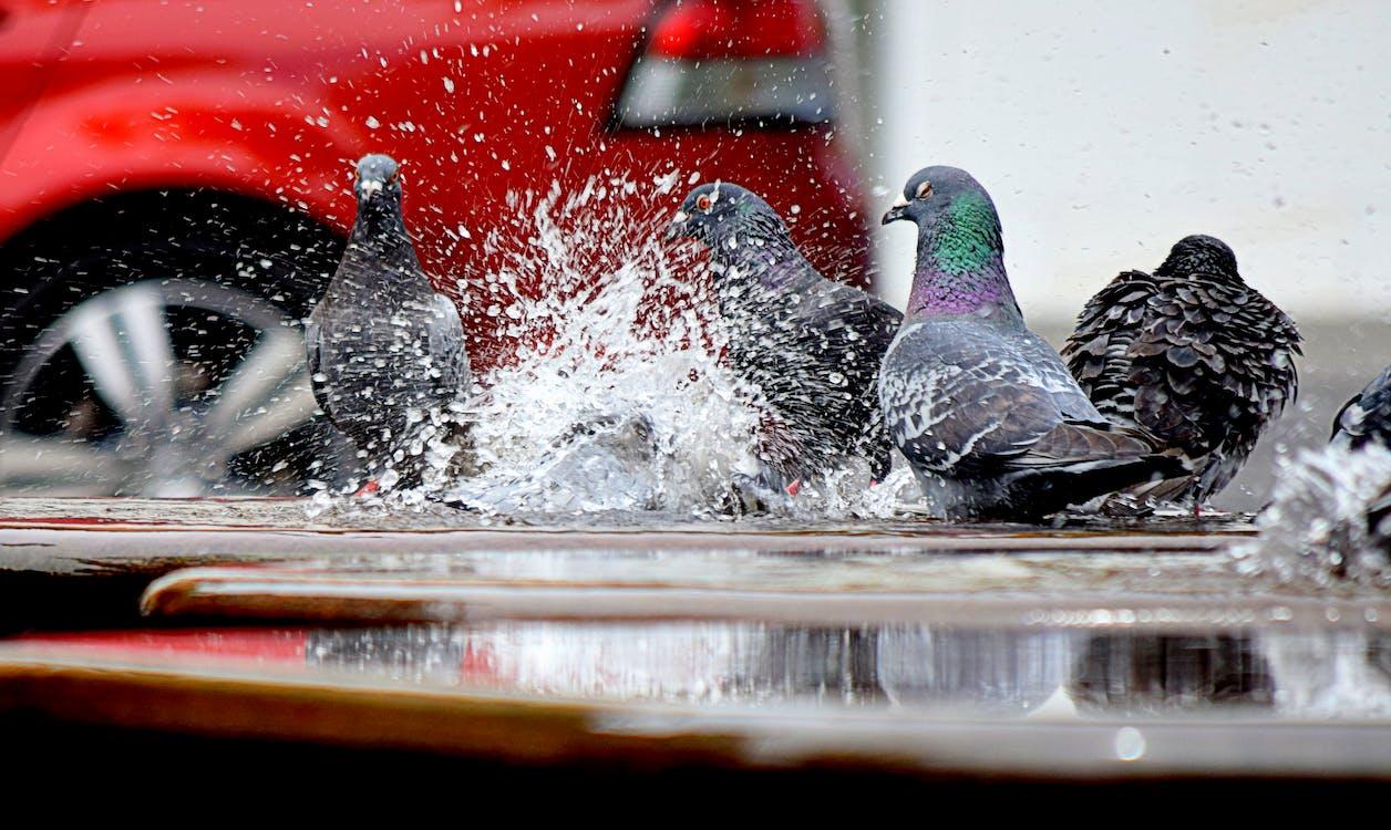 aigua, coloms, color