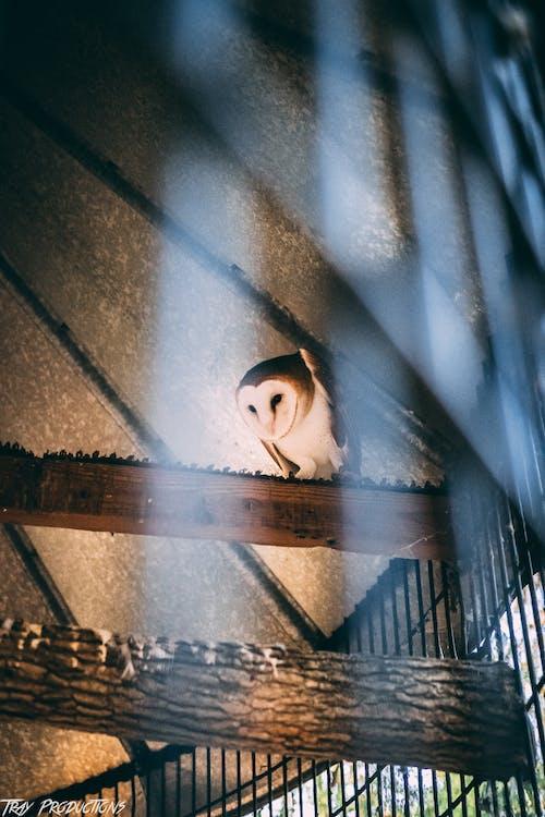 คลังภาพถ่ายฟรี ของ คนรักสัตว์, ทัศนียภาพ, ธรรมชาติ, นกฮูก
