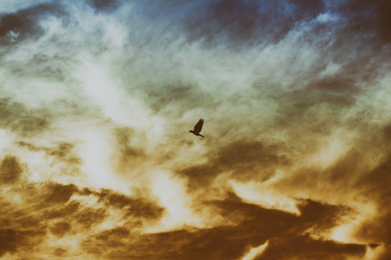 Bird Flying on Cloudy Sky