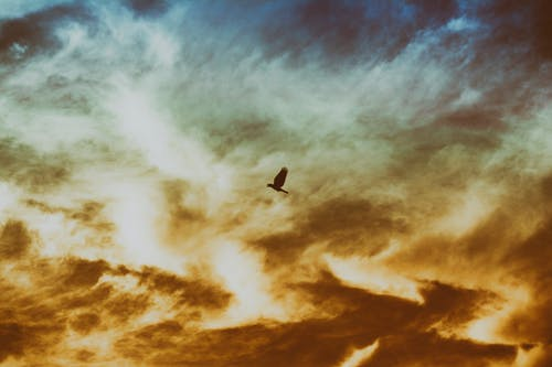 Bird Flying on Cloudy Sky
