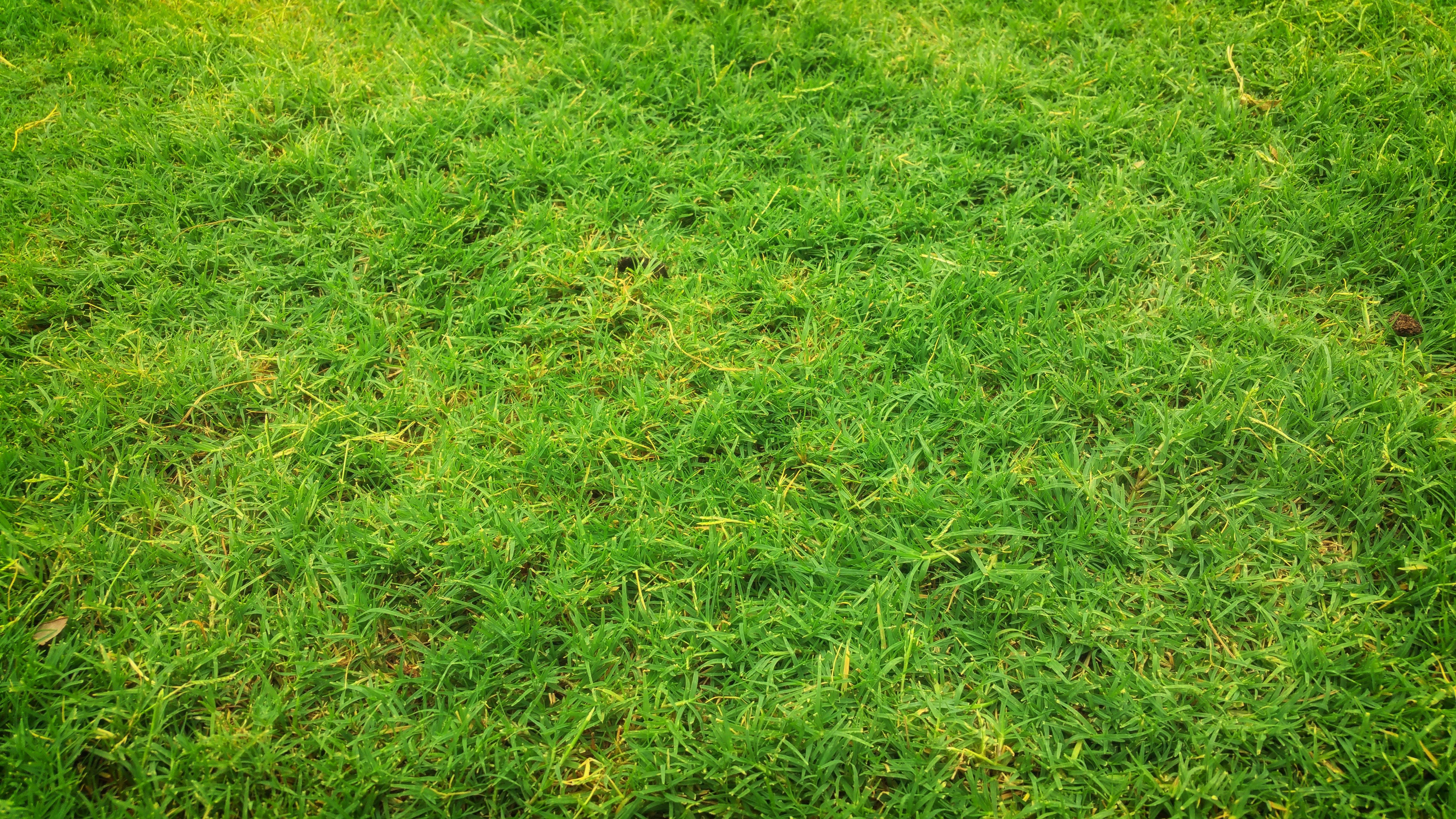 Kostenloses Stock Foto zu erde, feld, gras, grasfläche