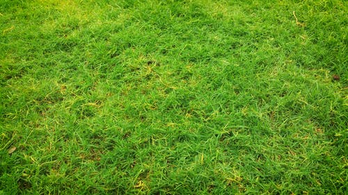 Foto profissional grátis de área, aumento, campina, campo de grama