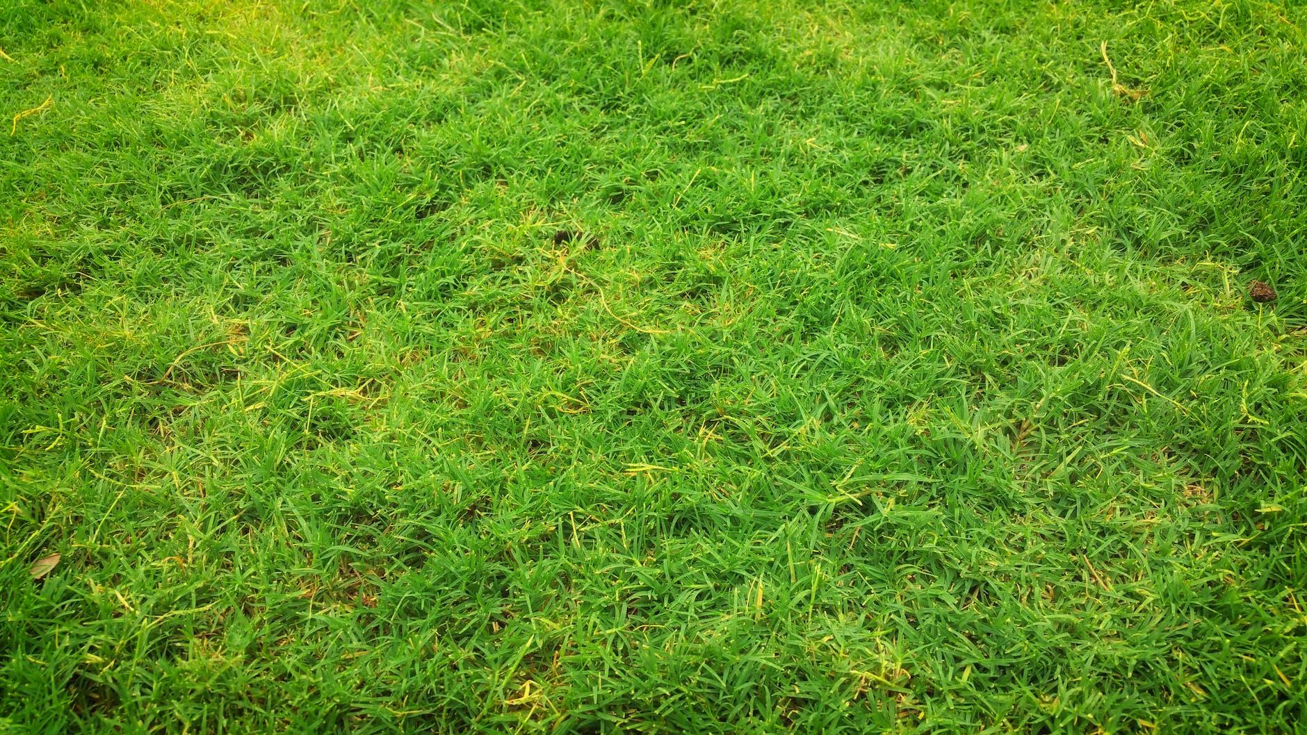 green grass types