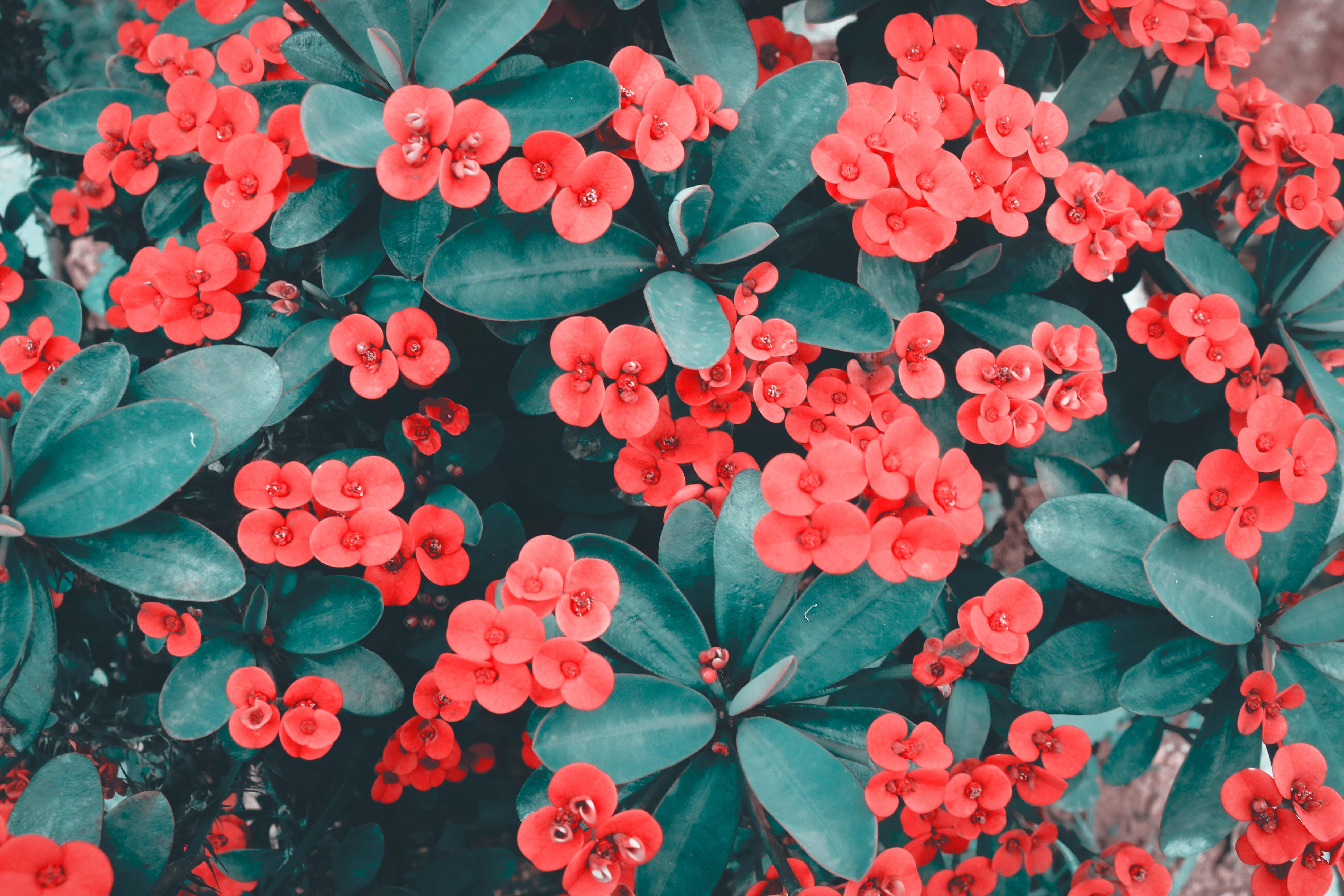 1000 Interesting Red Flowers Photos Pexels Free Stock Photos