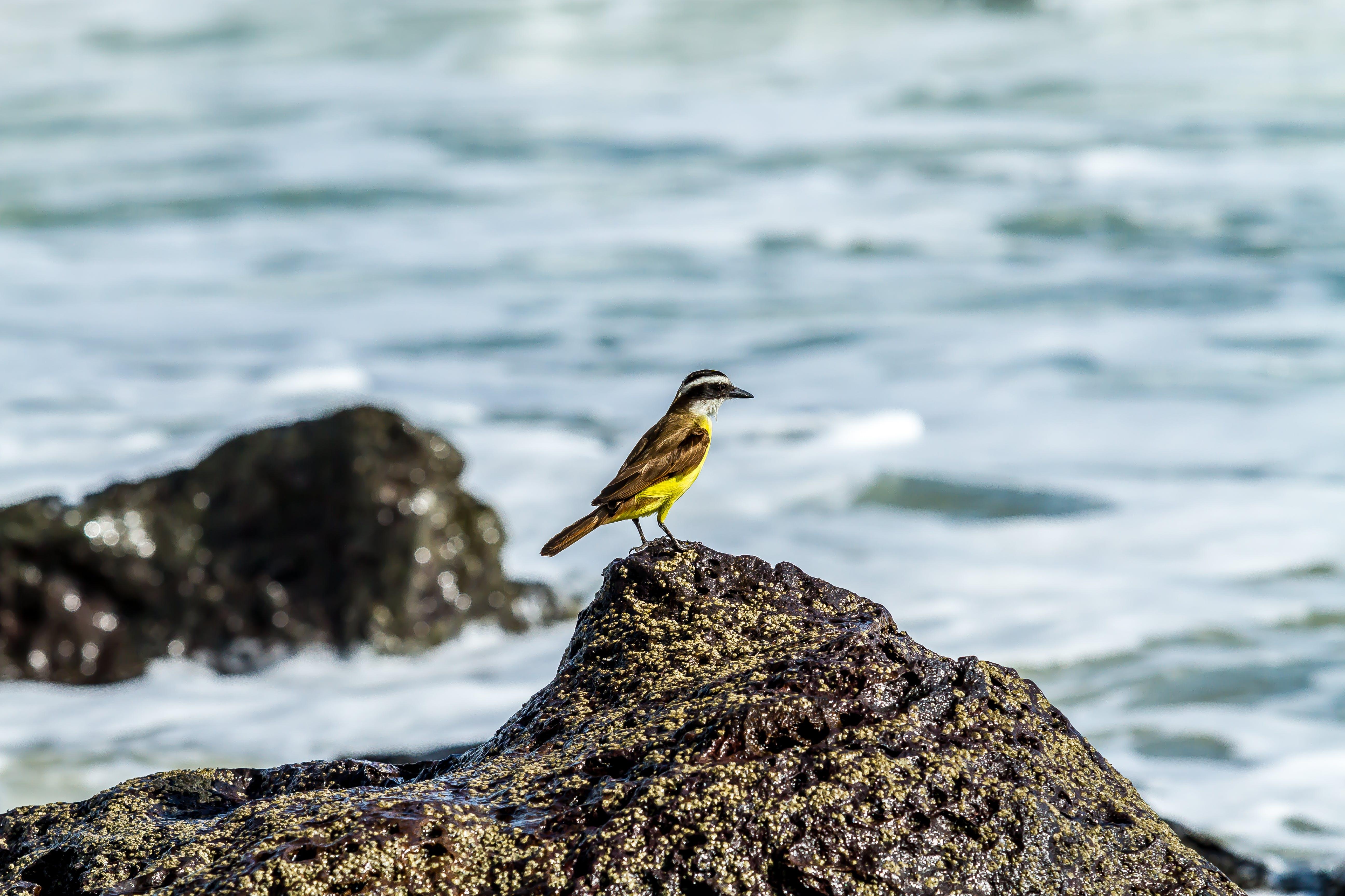 Free stock photo of beautiful, brasil, life, nature