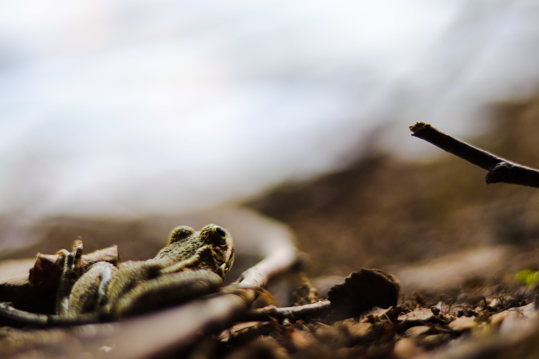 Free stock photo of acrophotography, amphibian, amphibians, amphibiansofinstagram