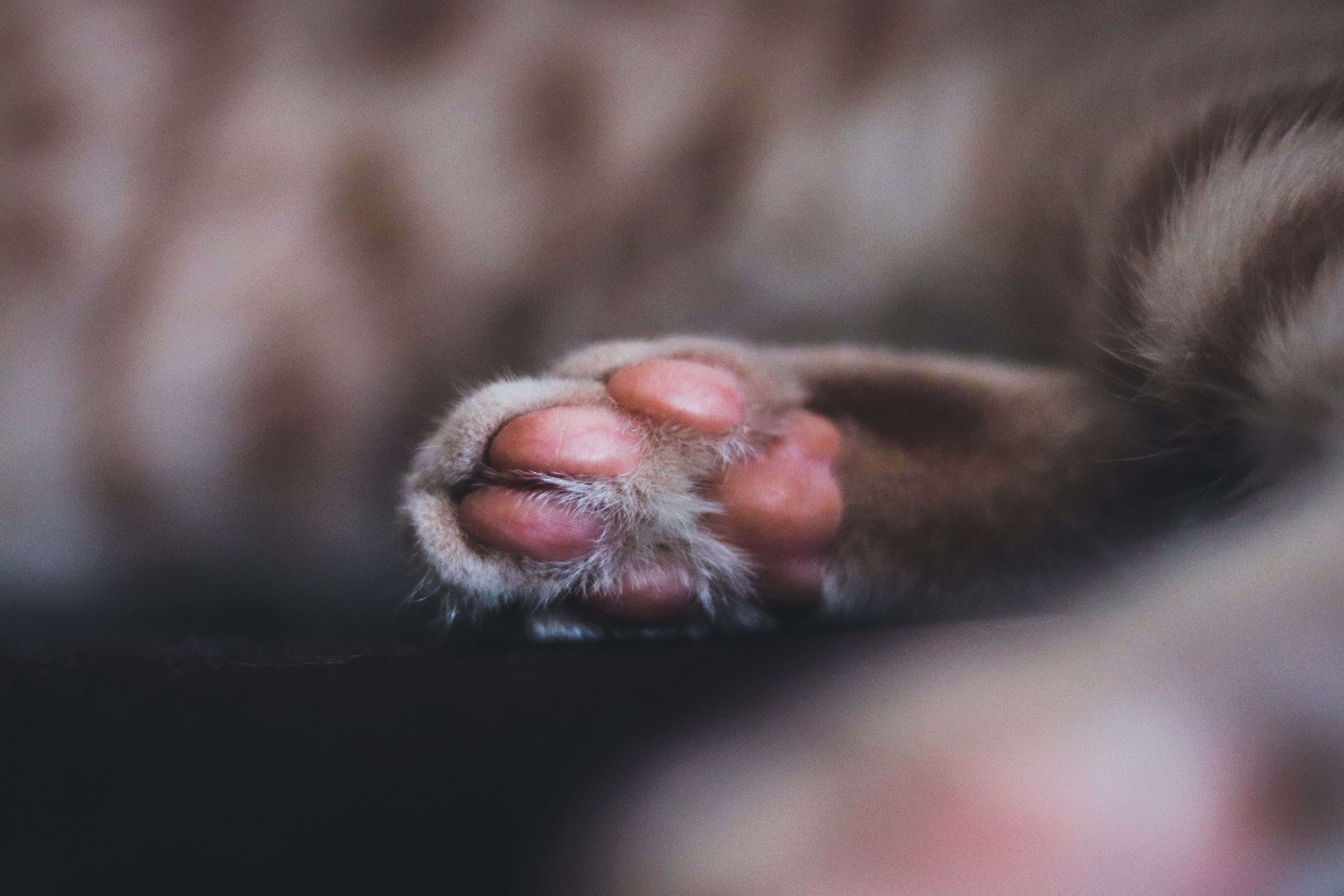 Close-Up Photo of Cat's Paw