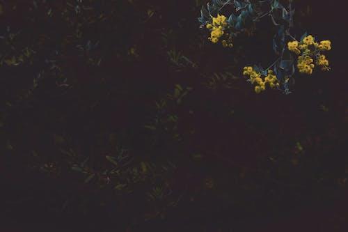 Fotos de stock gratuitas de flora, floración, flores, planta
