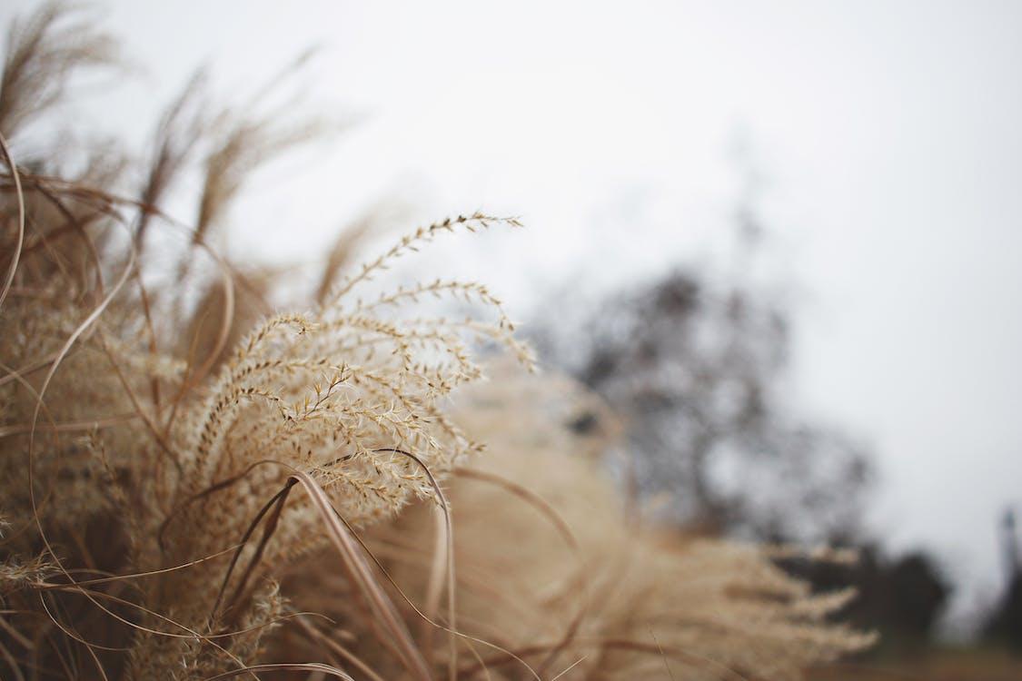 hnědá, hřiště, plevel