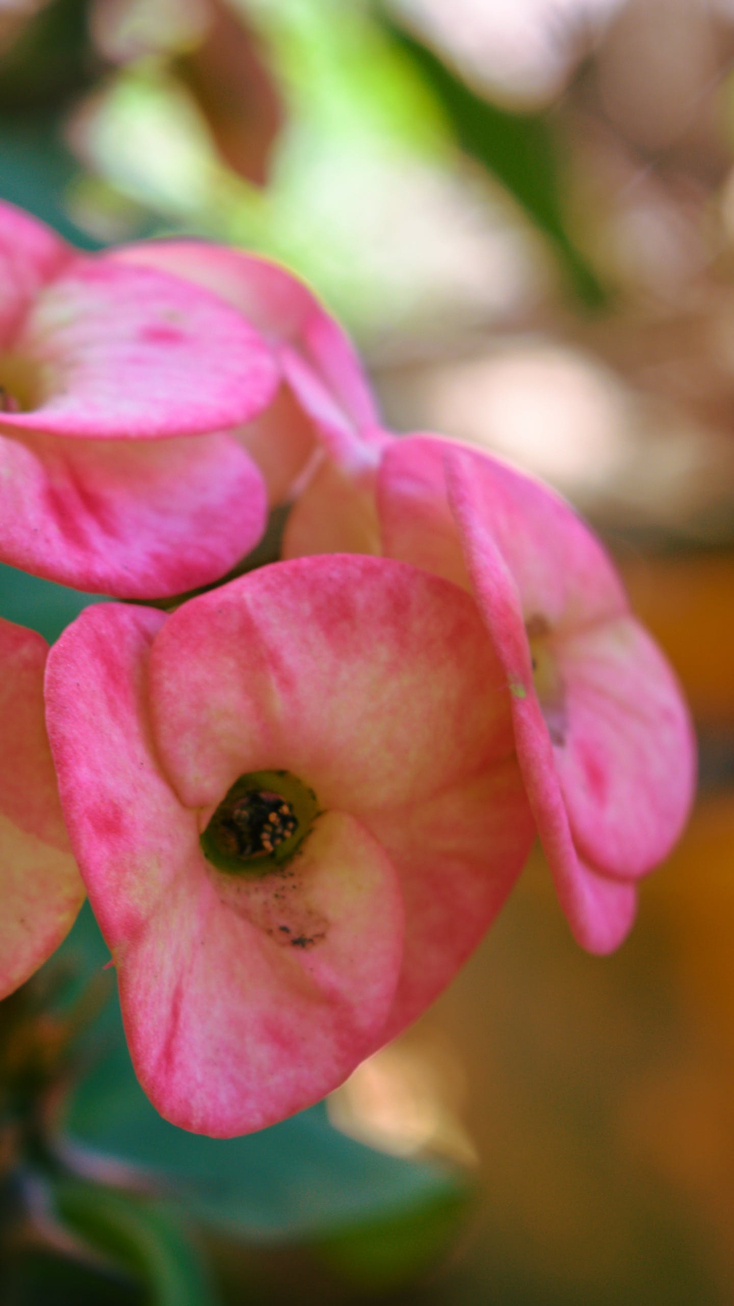 Free stock photo of beauty, bokeh, flower, macro