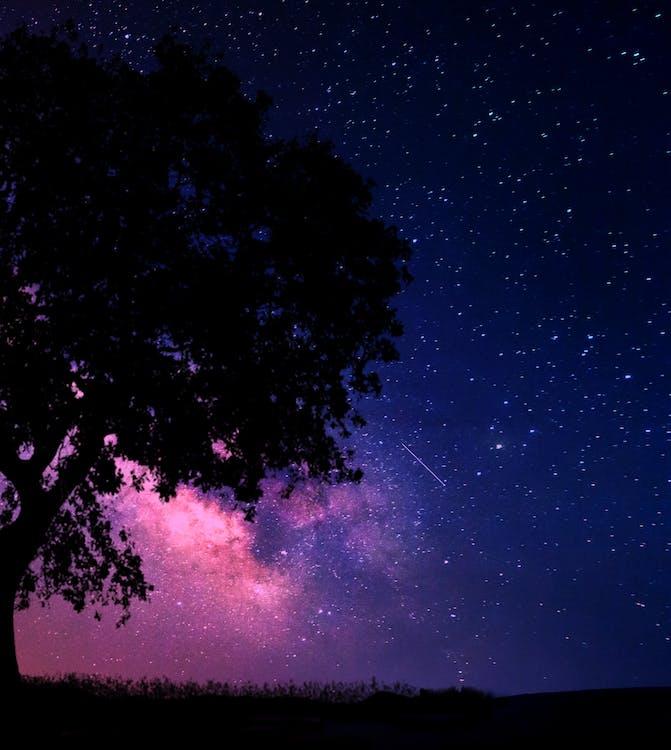 나무, 밤, 별