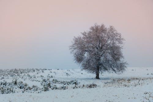Fotobanka sbezplatnými fotkami na tému chladný, mráz, mrazivo, počasie