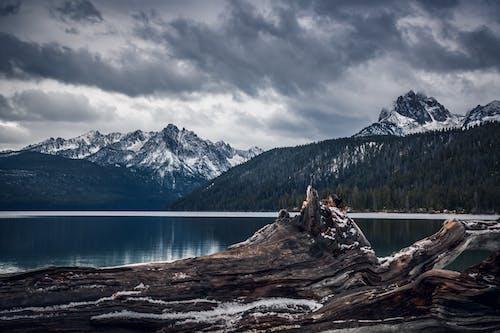 Photos gratuites de arbres, aube, aventure, bois