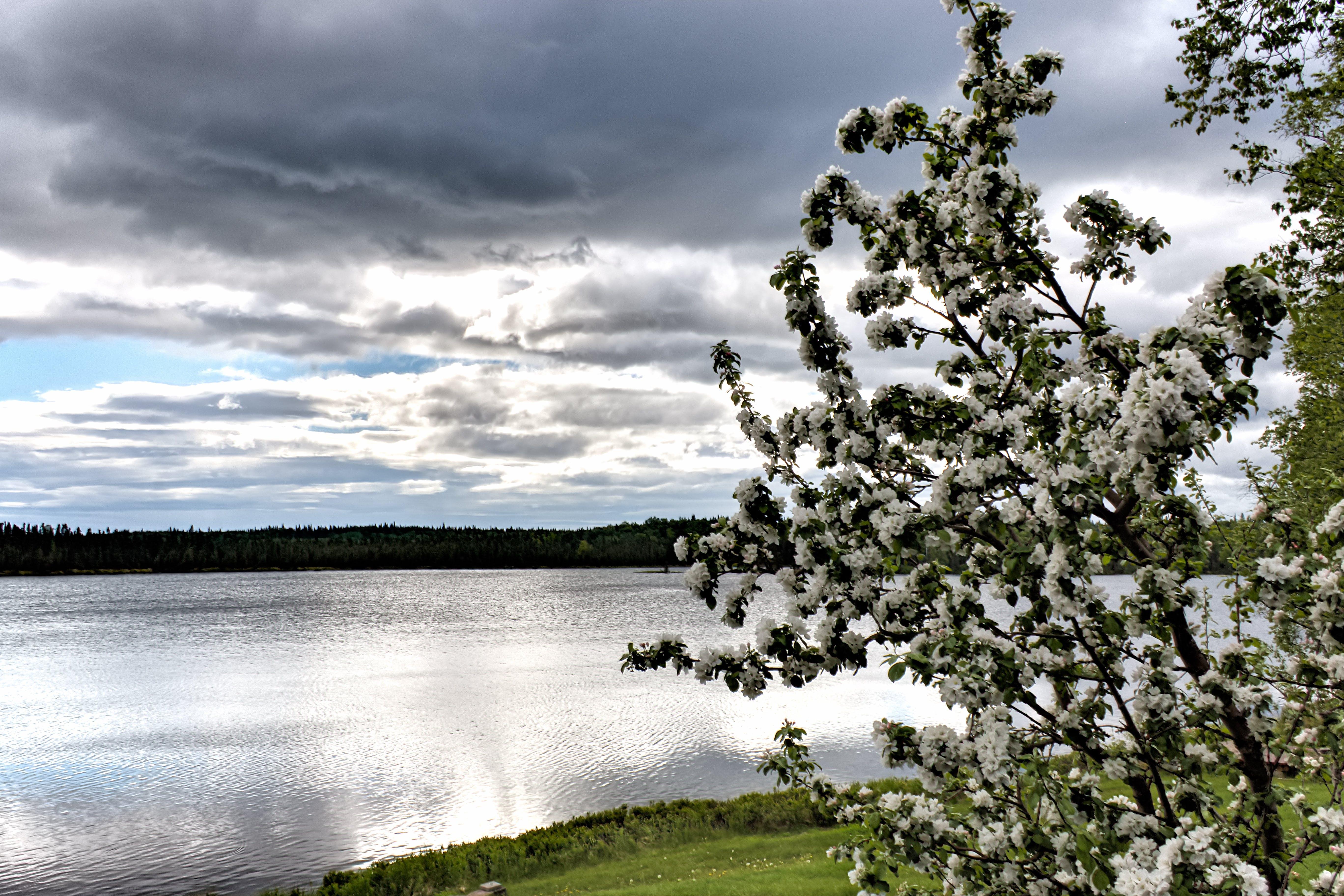 Δωρεάν στοκ φωτογραφιών με hdr, ανθίζω, μηλιά, τοπίο