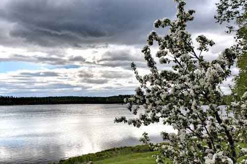 Ilmainen kuvapankkikuva tunnisteilla hdr, kukinta, maisema, omenapuu