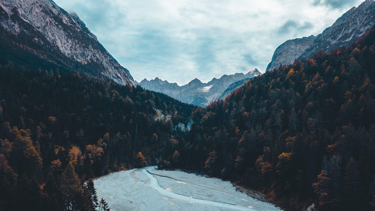 ağaçlar, dağlar, doğa