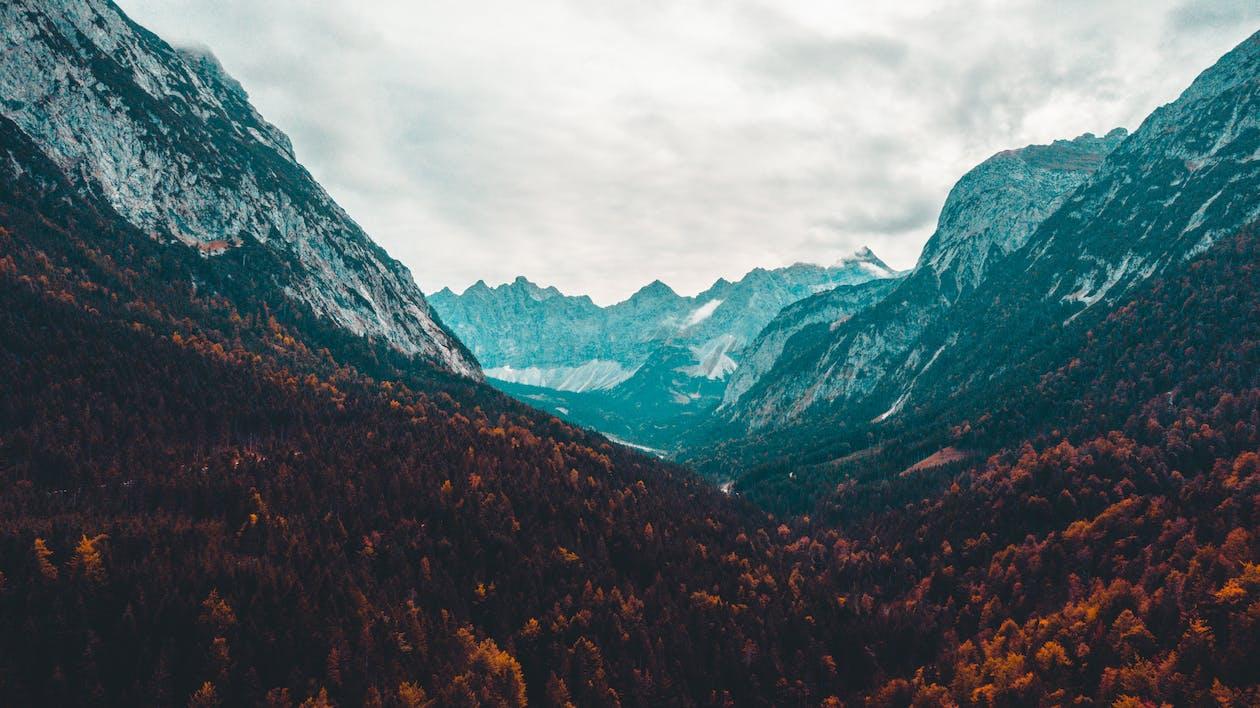 ความเป็นป่า, ต้นไม้, ทัศนียภาพ