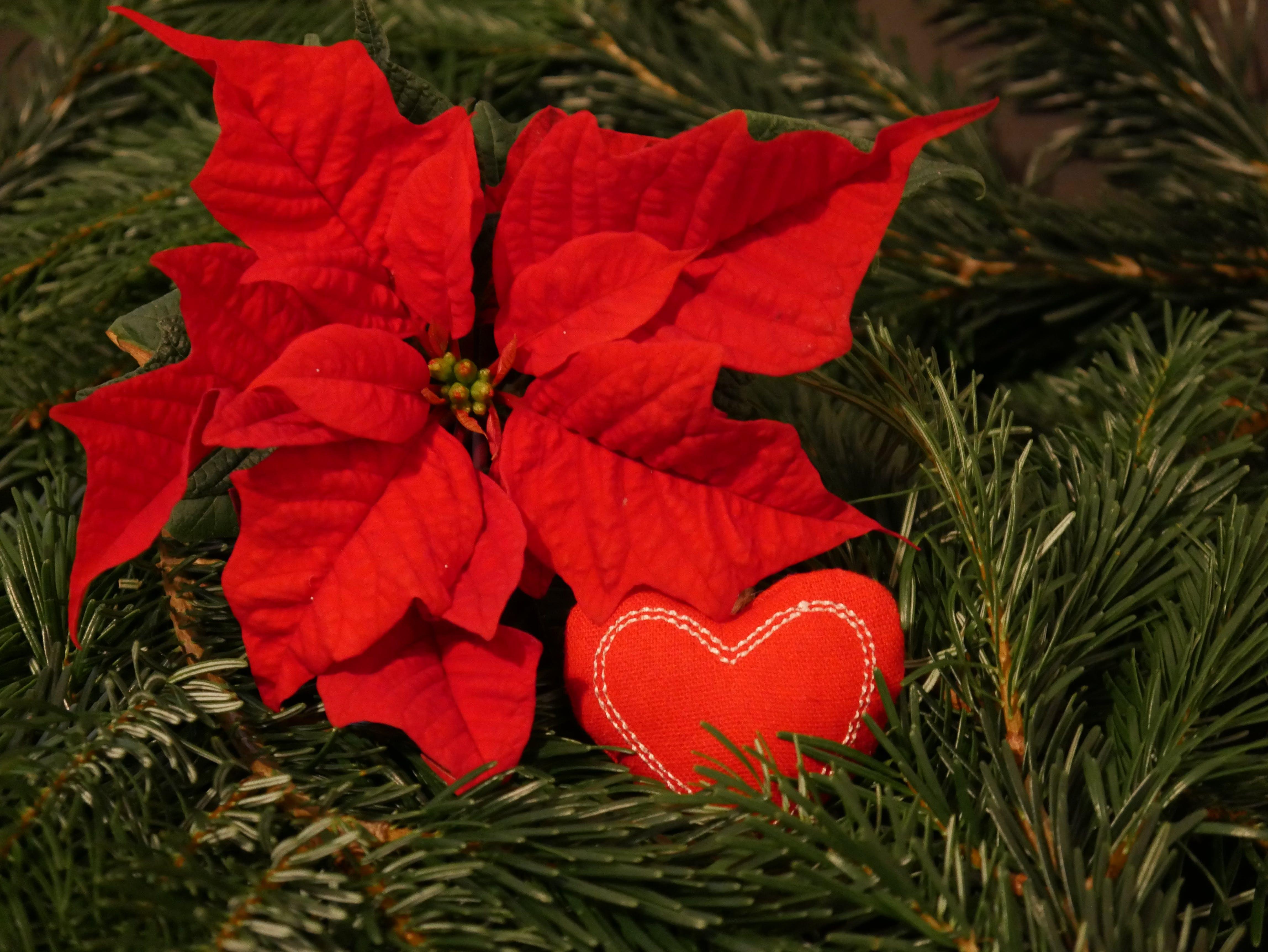 Free stock photo of christmas, christmas background, christmas wallpaper, merry christmas
