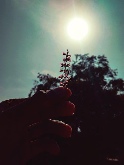 el, Güneş, güneş ışığı, güneş ışını içeren Ücretsiz stok fotoğraf