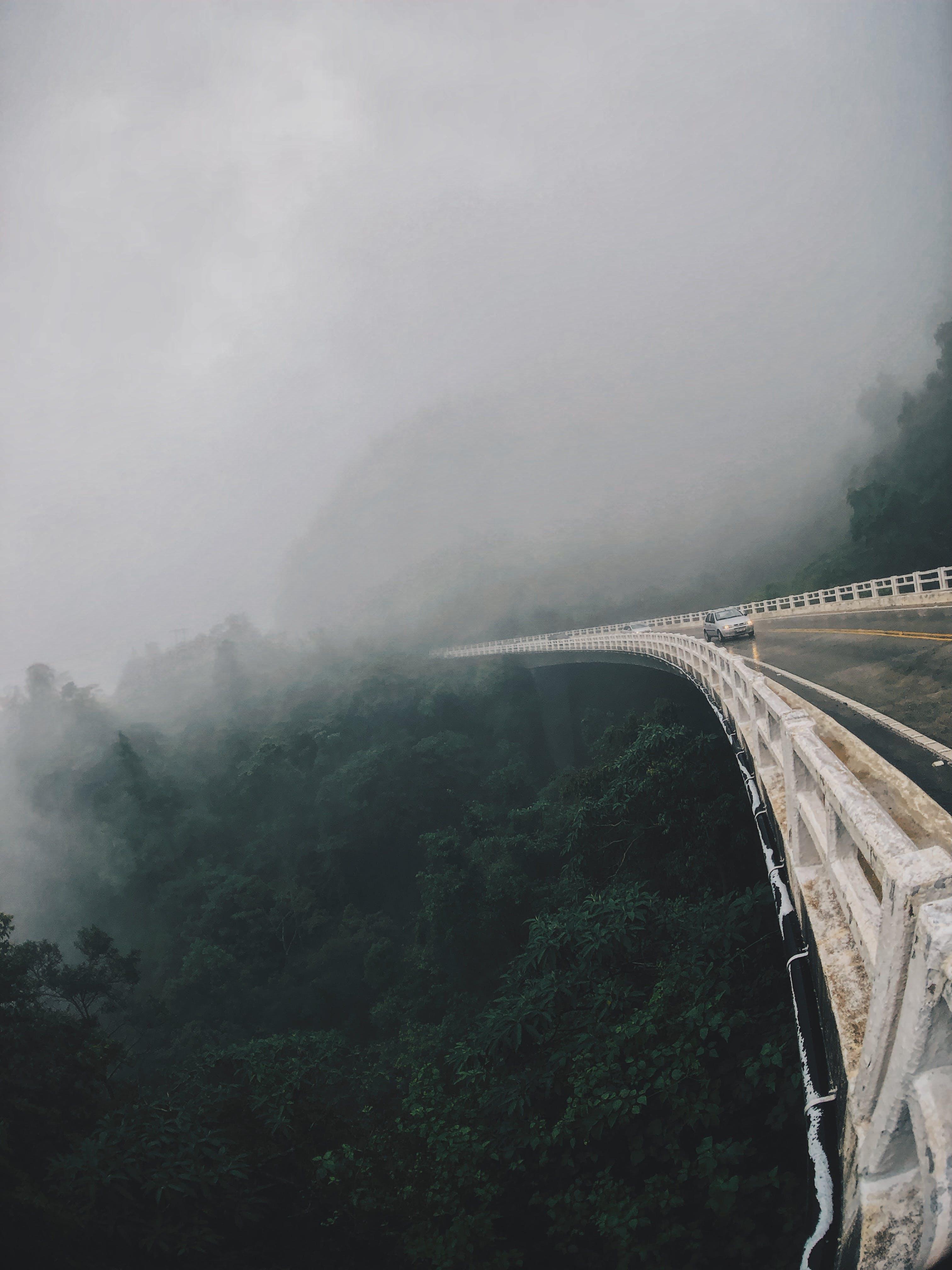 Long Bridge Above a Forest