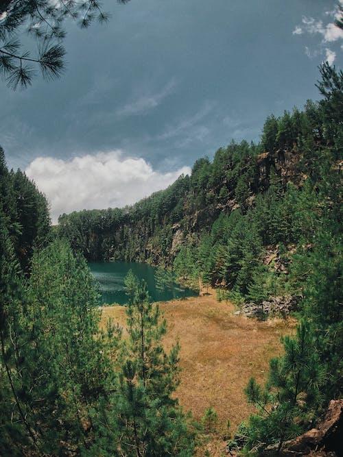คลังภาพถ่ายฟรี ของ ต้นไม้, ทัศนียภาพ, ธรรมชาติ, ป่า
