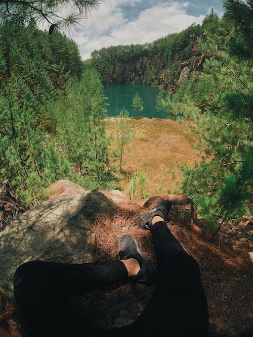 Ingyenes stockfotó erdő, fák, festői, Látvány témában