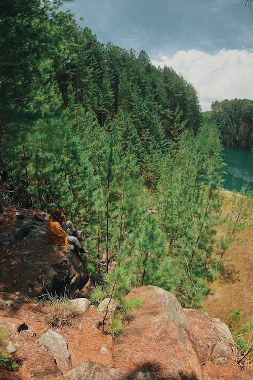 女人坐在樹旁的岩石上