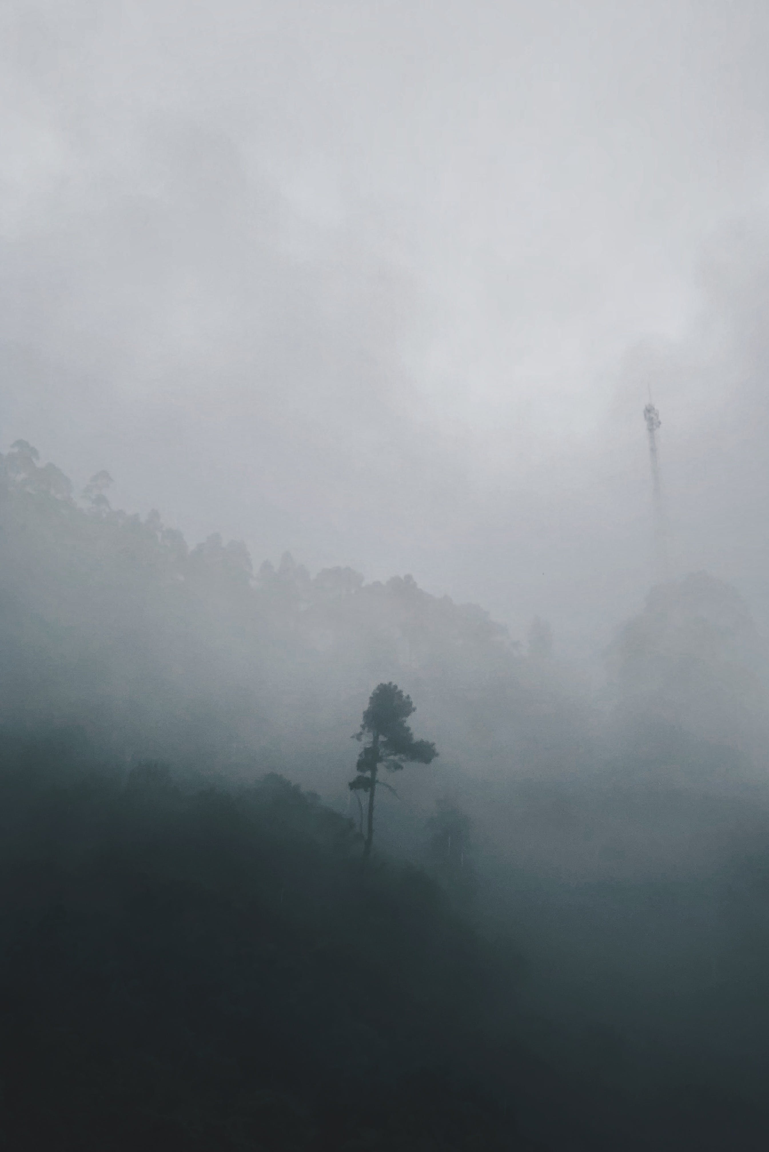 Forest Covered in Heavy Fog