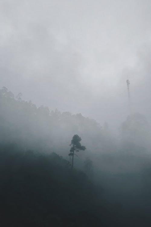 Foto profissional grátis de enevoado, floresta, garoa, neblina