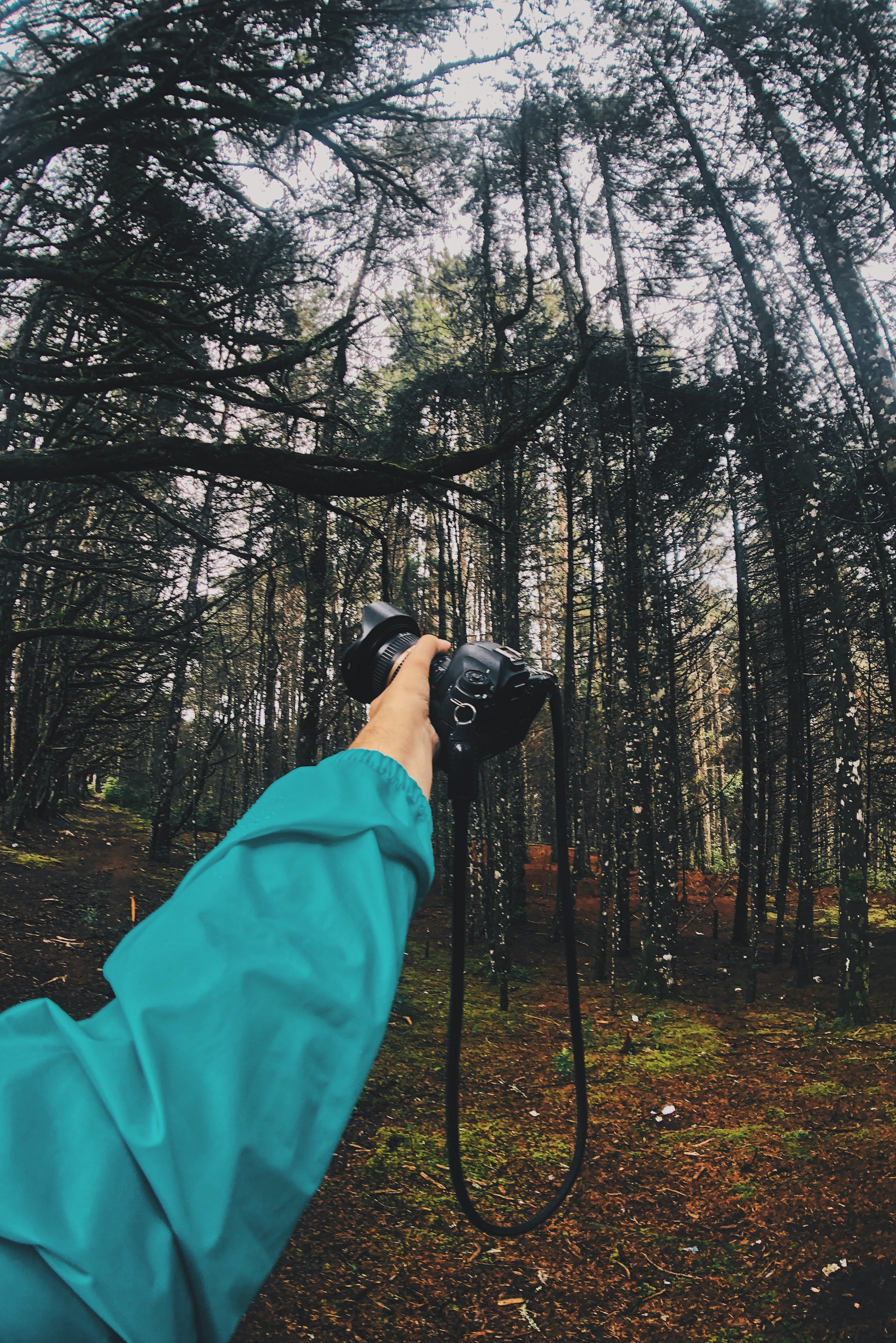 Man Holding a Camera in the Forest