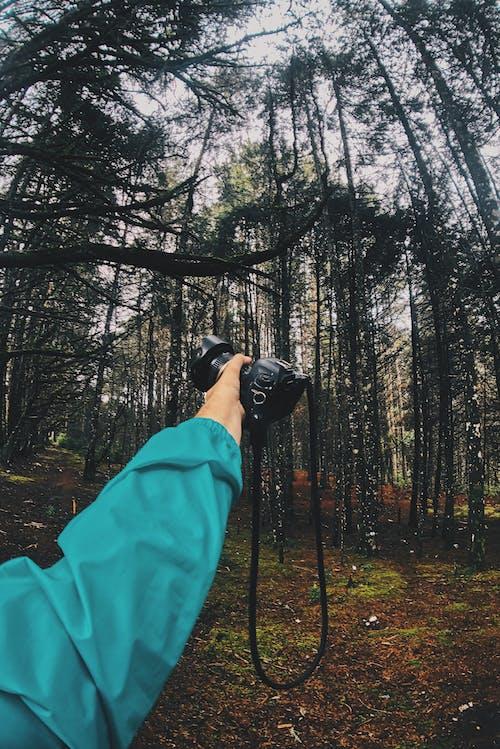 คลังภาพถ่ายฟรี ของ กล้อง, ต้นไม้, ป่า, แขน