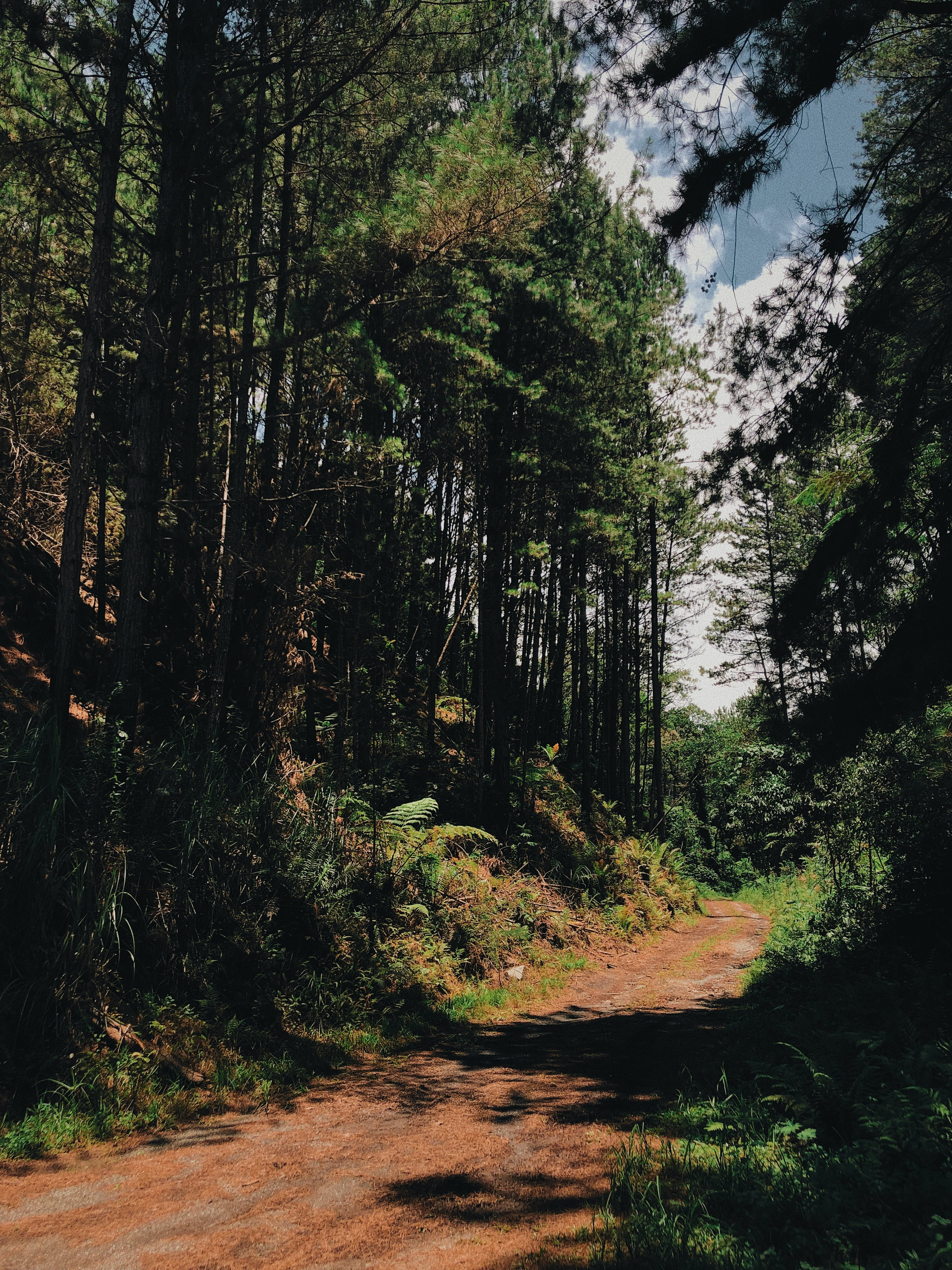 Dirt Path in the Middle of the Forest