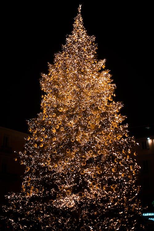 Photo of Lighted Christmas Tree at Night