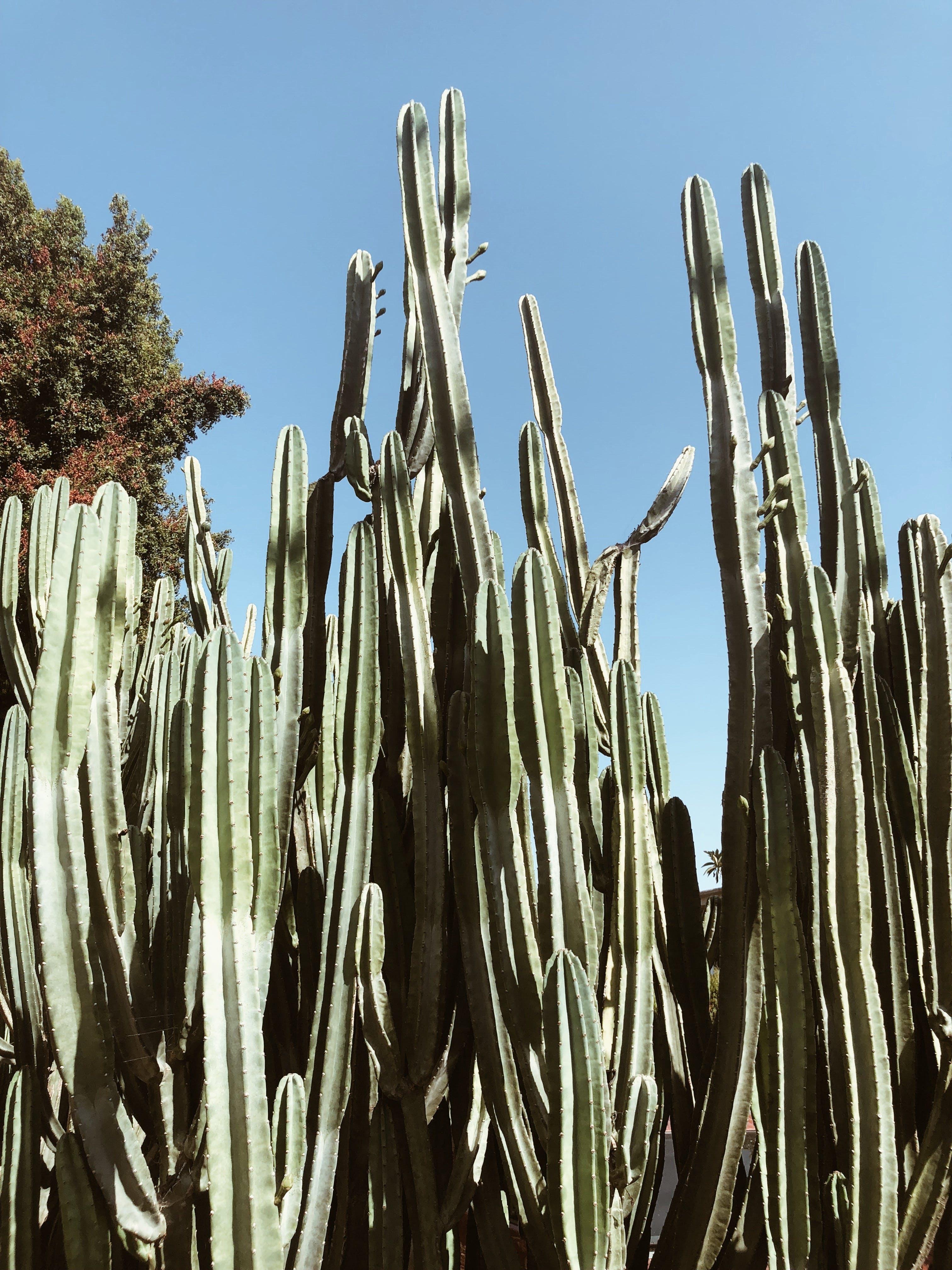 Shallow Photo Of Cacti