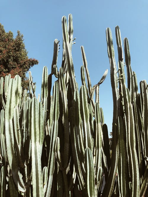 Shallow Photo Of Cacti