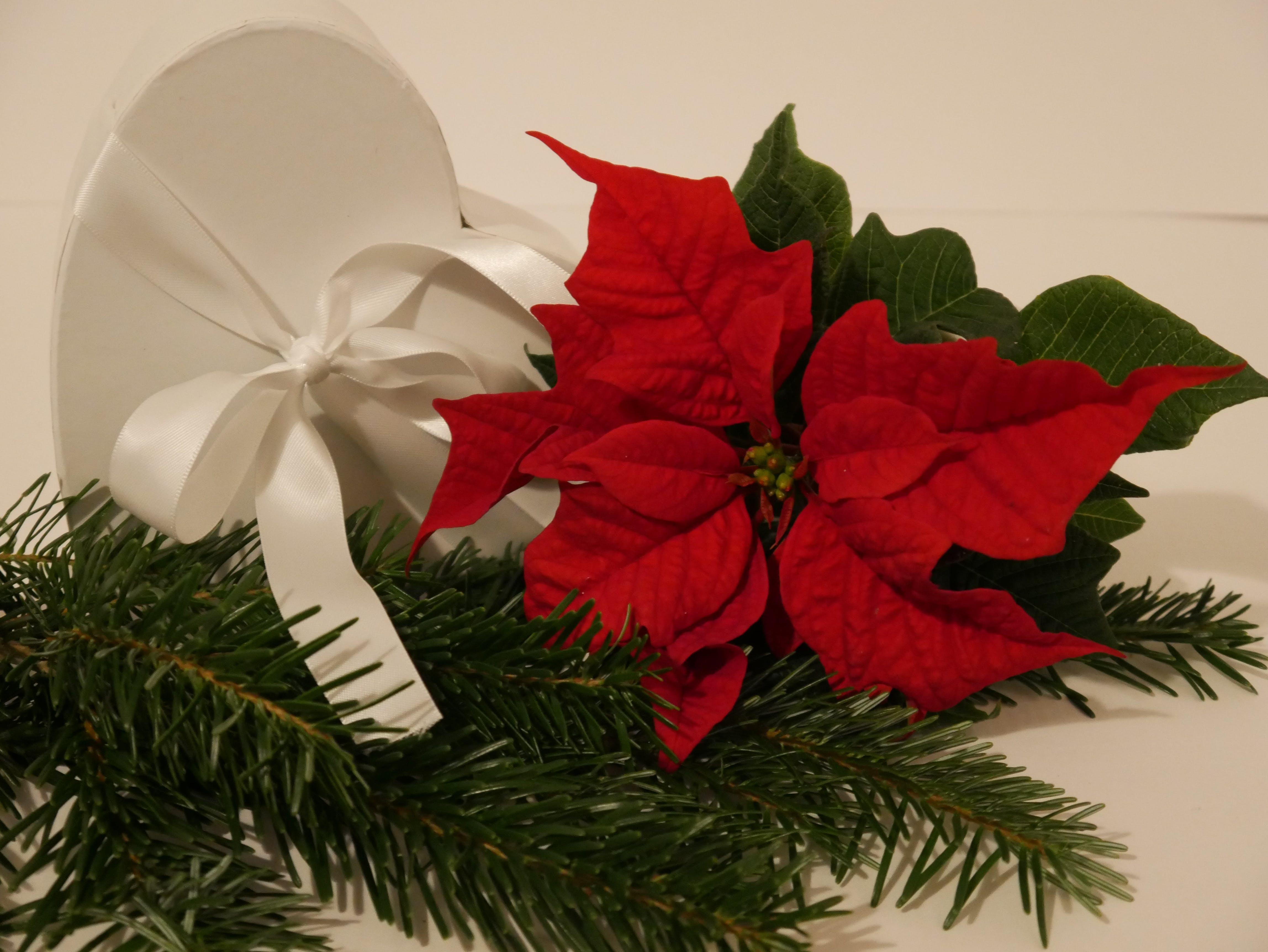 Kostenloses Stock Foto zu weihnachtsgeschenk, weihnachtsstern