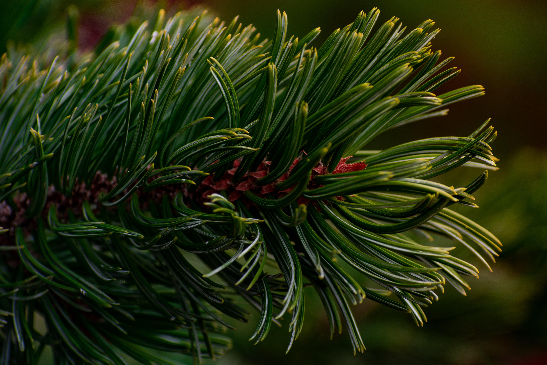 Free stock photo of beautiful, branch, closeup, colorful