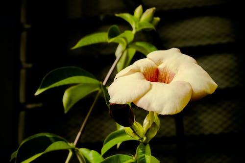 Gratis stockfoto met mooie bloemen