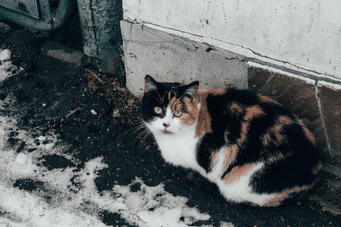 animal, felino, fotografía de animales