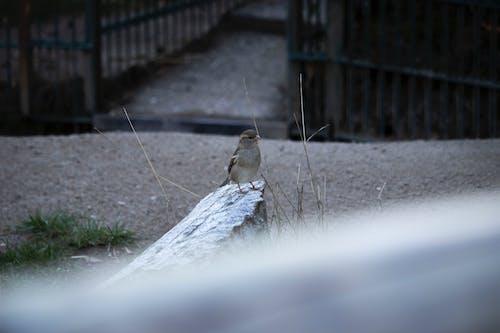 Foto profissional grátis de foco seletivo, passarinho