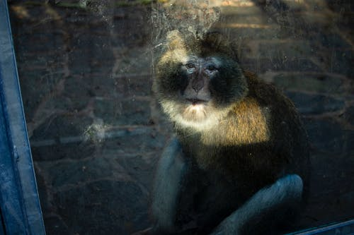 Foto profissional grátis de isolado, luz dramática, macaco, triste